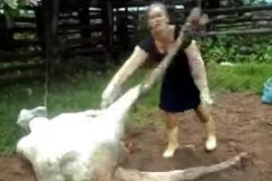 Cow-Kicks-Woman-In-The-Jaw-After-Giving-Birth